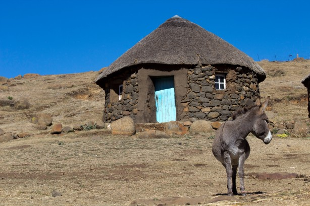 Donkey in Polateng