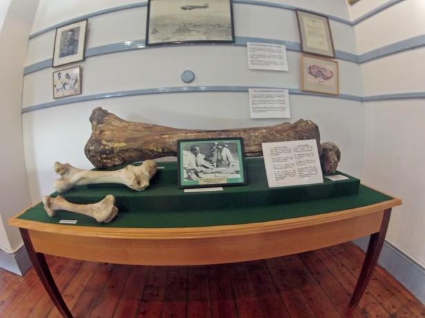 Top: Ancient Elephant Femur, Middle: Modern Elephant Femur, Lower: Modern Horse Femur