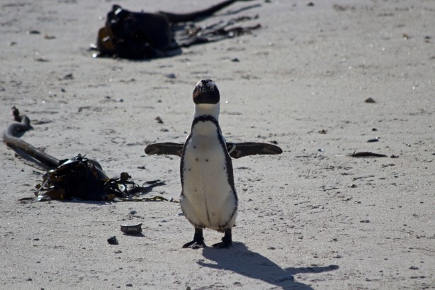 A Penguin With Big Dreams of Flying