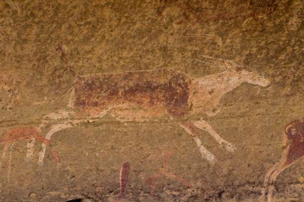 Bushmen Rock Art of an Eland