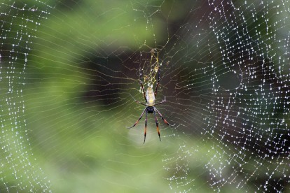 Spider at the Mafanaza Hide