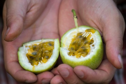 Gorging ourselves on wild passion fruit (photo by Sarah)